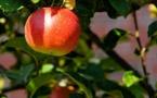 « Même pas peur » : la réponse d'Apple aux menaces de procès de Bruno Le Maire