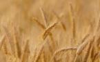 L'UE autorise le rachat de Monsanto par Bayer