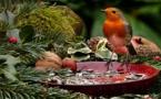 Agriculture et oiseaux ne font pas bon ménage