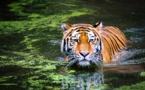 Animaux sauvages, les plus aimés sont le plus en danger