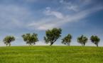 Environnement sous Macron : beaucoup de bruit pour quels résultats ?