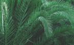 La région Grand Est s'attaque à l'huile de palme pour défendre la filière colza