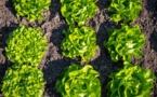 Alimentation et agriculture : trop d'ambitions différentes pour une seule loi