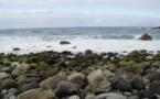 Bretagne, les algues vertes réagissent aux évolutions climatiques