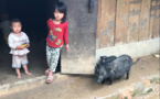 Solidarité : l'association Enfance Partenariat Vietnam développe des élevages de porcs pour des familles démunies