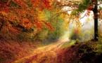 Les forêts françaises aussi sont en danger