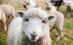 Bien-être animal et soutien des éleveurs, le gouvernement propose l'équilibre