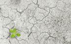 Les 50 milliards de dollars de la Banque Mondiale pour l'adaptation au changement climatique
