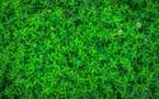 Transition écologique et pouvoir d'achat posent une équation ardue