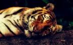 28% des animaux meurent à cause de l'homme