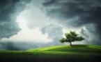 Ecosia, le moteur de recherche écolo qui a déjà planté 50 millions d'arbres