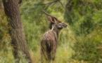 Mozambique, les effets de la disparition des grands carnivores