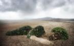 Ecologie : les petites astuces de « madmoiZelle » pour agir