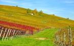 Transition écologique : les régions adoptent une feuille de route mollassonne