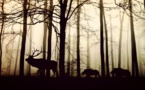 Biodiversité : la sixième extinction de masse en cours