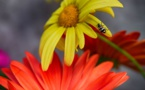 G7 environnement ce que prévoit la Charte de Metz sur la biodiversité