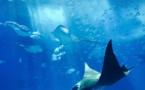 Life below water : la vie aquatique, Objectif de Développement Durable n°14 de l'ONU
