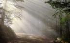 Total crée une unité pour préserver la forêt