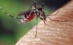 Des chercheurs avancent dans la lutte contre le moustique-tigre