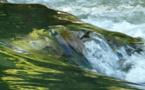 Eau : l'appel à la modération de France nature environnement