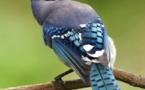 Haute-Ariège : une soixantaine d'oiseaux protégés retenus illégalement relâchés