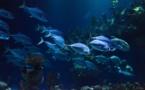 Récif de l'Amazone : selon Greenpeace un écosystème « nouveau et unique »