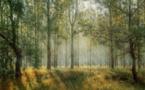 """Forêt de St-Germain-en-Laye : le massif classé en """"forêt de protection"""""""
