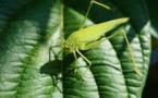 Biodiversité : création d'un nouvel établissement en France