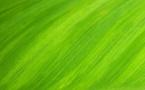 L'économie verte est un concept fourre-tout estiment des chercheurs