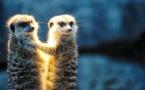 Zoo de Londres : fortes critiques des autochtones