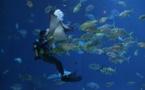 De nouveaux poissons mystérieux à venir découvrir à Monaco