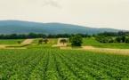 Biodiversité et agriculture : accord entre le CIRAD, l'AFD et Expertise France