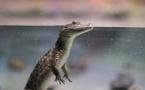Coronavirus : l'exposition aux espèces sauvages, une menace ?