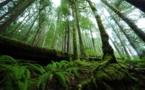Trafic de bois : rapport Greenpeace sur les exactions du groupe Danzer
