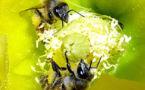 Apiculture : une politique publique à destination des abeilles Rhône-alpines