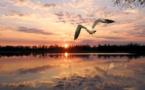 Baignade : la très bonne qualité des eaux européennes