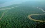 Carrefour s'entoure d'ONG pour limiter l'impact de son approvisionnement sur la forêt amazonienne