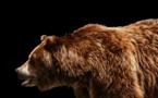 Ours abattu : 50 000 euros pour tout témoignage ou Omerta, ils sont tous devenus fous