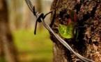 Dendrochimie : quand l'homme apprend de la sagesse des arbres