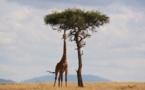 Kenya : un entrepreneur lutte contre la déforestation