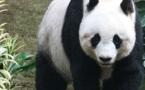 La conservation des espèces en voie de disparition doit-elle obéir à un principe de rentabilité ?