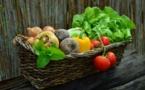 Les menus végétariens ont un impact positif sur les émissions de CO2