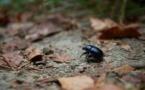 Ouverture d'une méga ferme d'insectes près d'Amiens