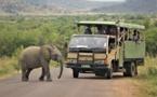 « Décoloniser la protection de la nature » : WWF et WCS toujours sous pression