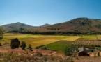 Bois rose menacé : un agriculteur malgache met au point une technique révolutionnaire