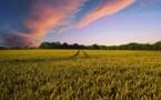 Carrefour promet de favoriser les filières locales