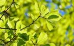 Une forêt en ville : l'initiative d'une association adoptée par le Val-de-Marne
