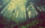 Ne pas prendre soin des forêts c'est augmenter les émissions de CO2