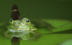 Biodiversité : un rapport alarmant sur la détérioration en France depuis 2008