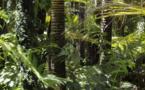 Se désintéresser du sort de l'Amazonie et de forêts d'Asie n'est pas raisonnable